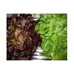 Salade au choix pièce (voir...