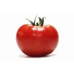 Tomate ronde - au kg