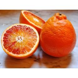 Épuisé - Orange tarocco