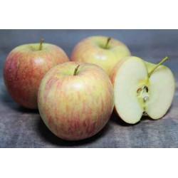 Epuisé - Pommes Fuji