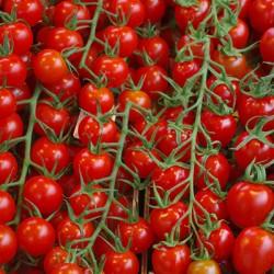 Tomates cocktail vrac