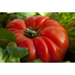 Tomate type cœur